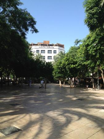 Hostal Parque: The tree lined square in front....