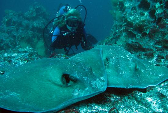 Academy Bay Dive Center: See life under the sea!