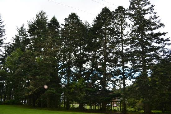 Tigh Na Bruach: Gardens with Trees