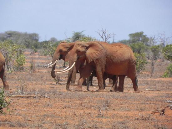 Watamu Beach: Tsavo Est Safari