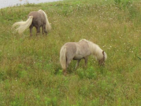Brigitte's Holiday Apartments: horses that graze in the field below
