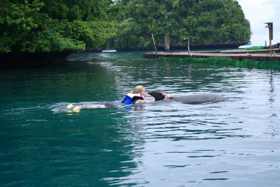 Dolphins Pacific: Friendly dophins taking us away