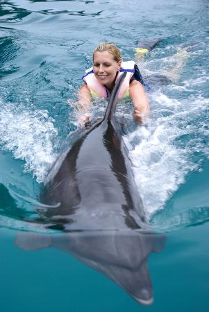 """Dolphins Pacific: These are the kind of photos they take of you during """"Symphony"""""""