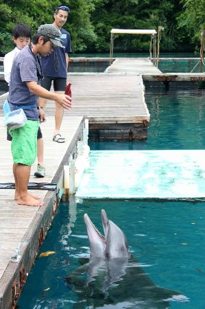 Dolphins Pacific: Feeding time