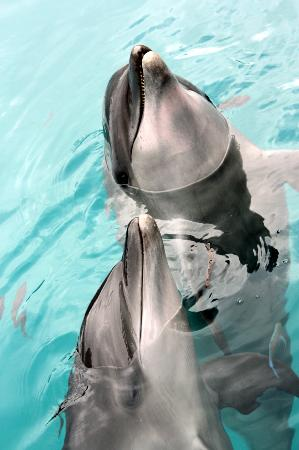 Dolphins Pacific: Mother and baby during Close Encounter