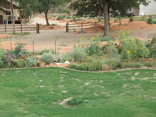 Zion Canyon Bed and Breakfast: gardens