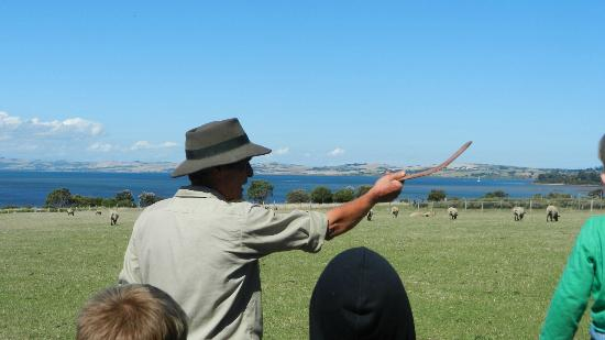 Phillip Island, Avustralya: Boomerang throwing lesson
