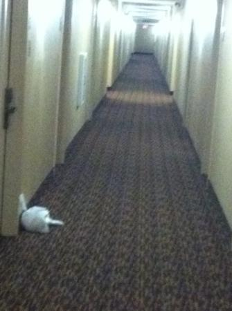 Extended Stay America - Meadowlands - East Rutherford: garbage in hallways