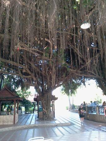 Pinnacle Grand Jomtien Resort: Возле ресторана