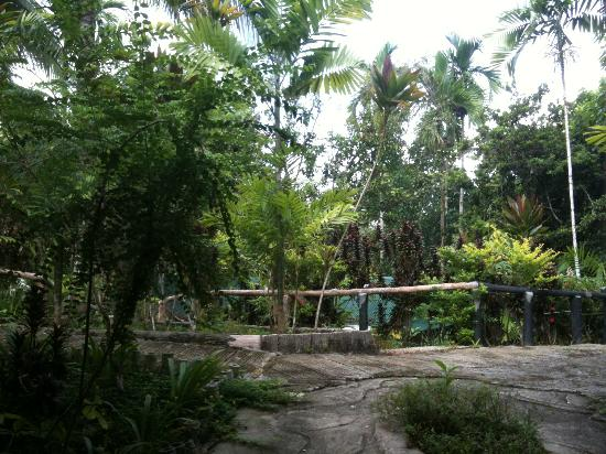 Sepilok Jungle Resort: Hotel grounds