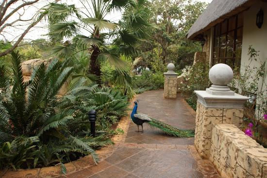 Summerfield Botanical Garden : iiizzz1