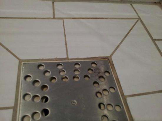 New West Inn Amsterdam: Placa de ducha con pelos(sin limpiar en 14 dias, lo tuve que hacer yo)