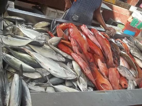 Sao Vicente, Cape Verde: Garupa!!!!!!