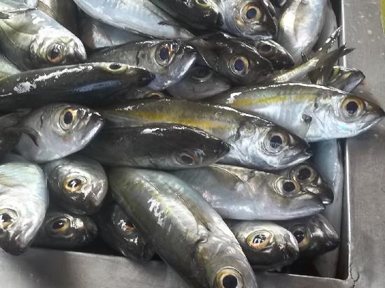 Mercado de Peixe: Pesci Pesci Pesci