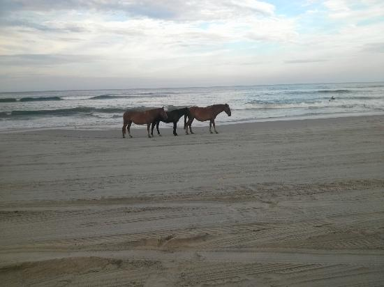 Hilton Garden Inn Outer Banks/Kitty Hawk: More horses on the beach