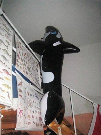 Orca Diving Ustica