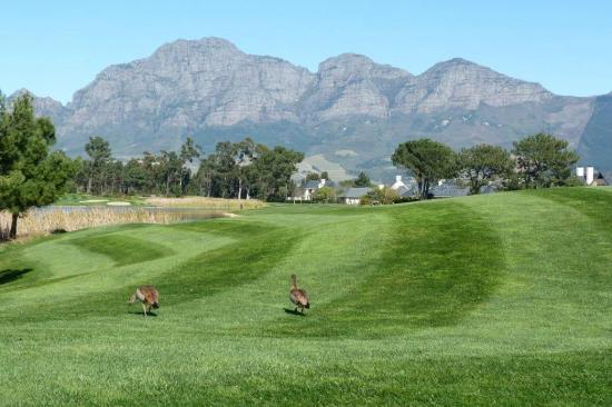 Pearl Valley Jack Nicklaus Signature Golf Course: Even the rough is perfectly trimmed!