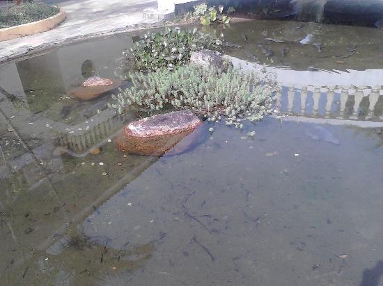 Paranagua, PR: tanque dos peixes