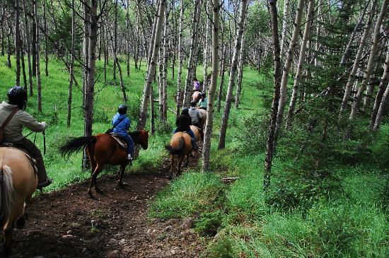 Jasper Riding Stables: 1 hour trail