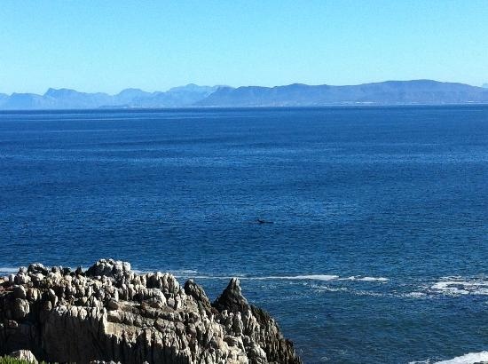 Marebella Seafront Guesthouse: The Whales