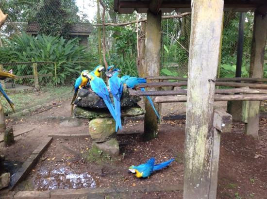 Zoo de Guyane: arras bleu