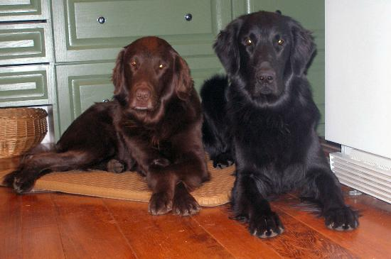 Belle Vue Bed and Breakfast: Tip and Pocos waiting to welcome YOU!