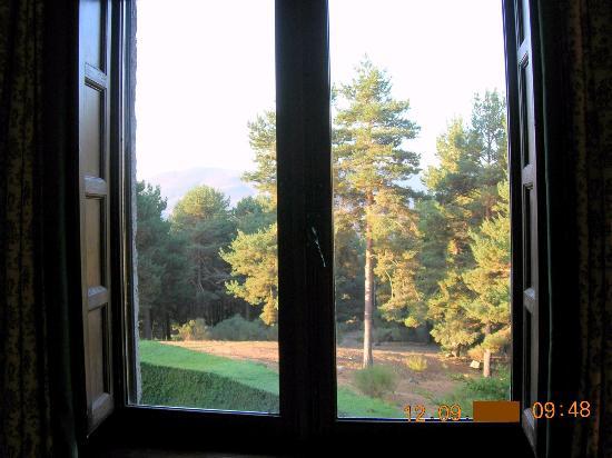 Parador de Gredos: Bosque desde la habitación