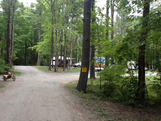 Saugerties/Woodstock KOA Campground: shady groves