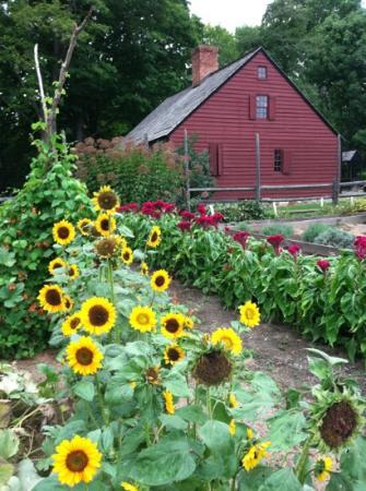 Jockey Hollow: wicks farm
