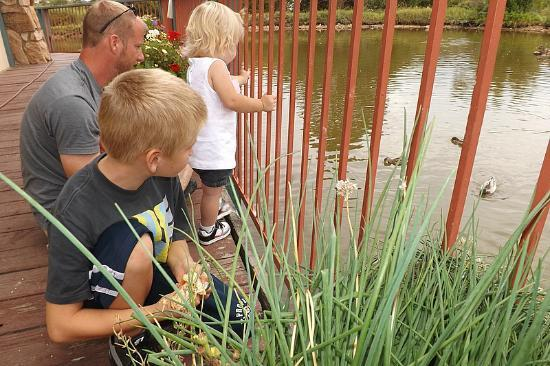 The Other Side: Feeding ducks at the restaurant