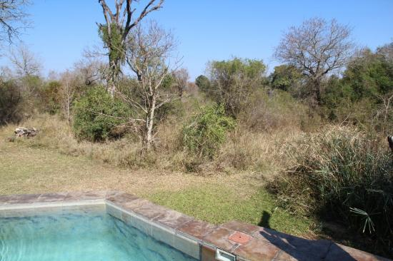 Sabi Sabi Bush Lodge: Room swimming pool