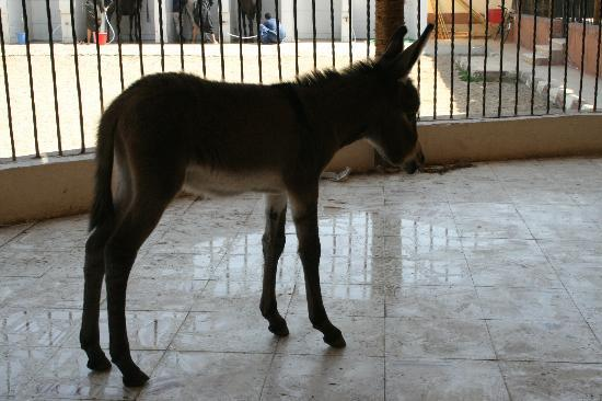 ACE- Animal Care in Egypt: Jules lost his mum