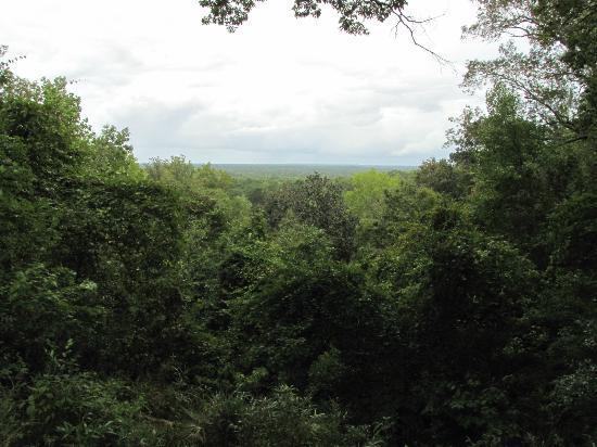 Torreya State Park: Vista overlook from camping site #16