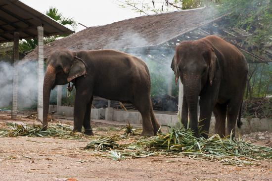Safari Park Open Zoo - Picture of Safari Park Open Zoo, Kanchanaburi - TripAd...