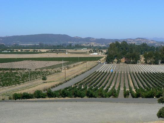Schug Carneros Estate Winery: beautiful views