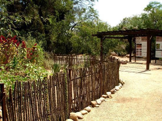 Tucson Botanical Gardens: Tohono Odan Path