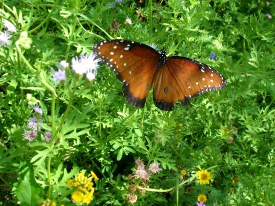 Tucson Botanical Gardens: Butterfly