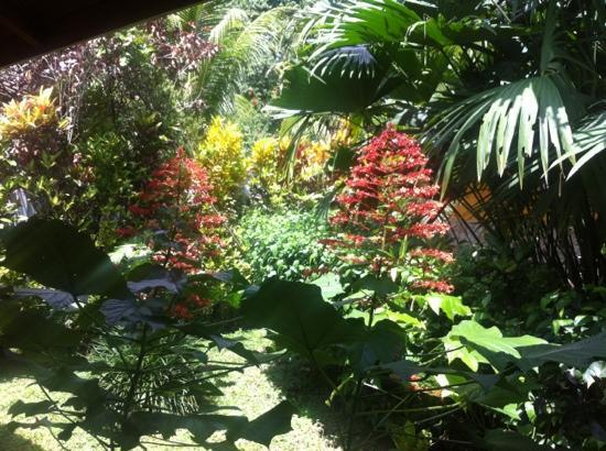 Bungalows Calalu: vue terrasse sur le jardin