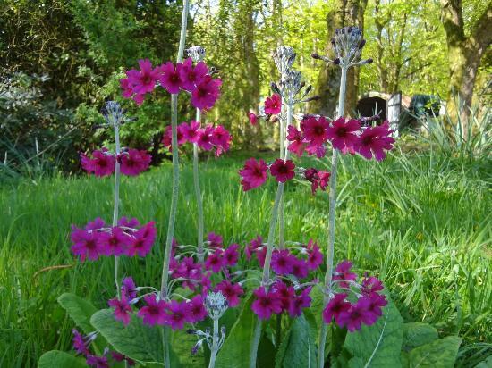 Springbank Bed & Breakfast: Achamore Gardens