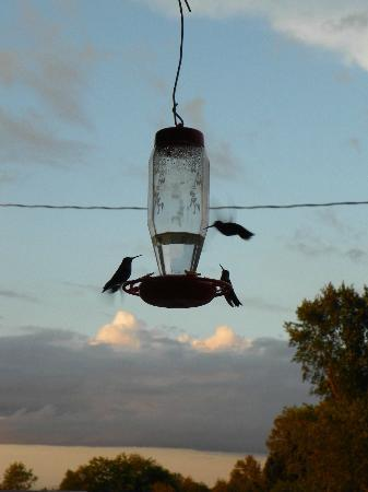 Sandtown Farmhouse Bed and Breakfast: Hummingbirds at feeder on porch