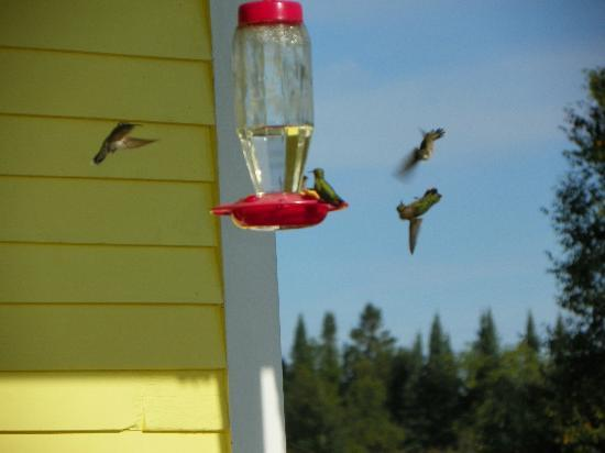 Sandtown Farmhouse Bed and Breakfast: Hummingbirds