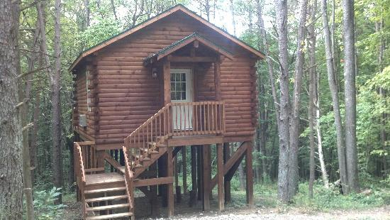 Blue Rose Cabins: The front of tree top cabin