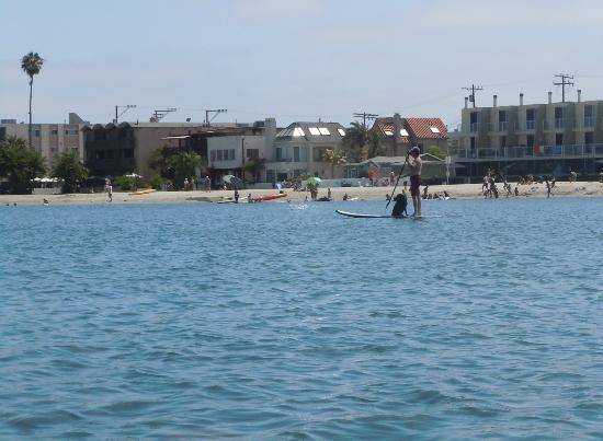 Mission Bay Park Man On Stand Up Paddle Board With His Dog