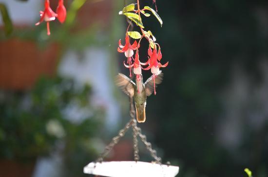 La Villa Serena: Hummingbirds in the garden!!