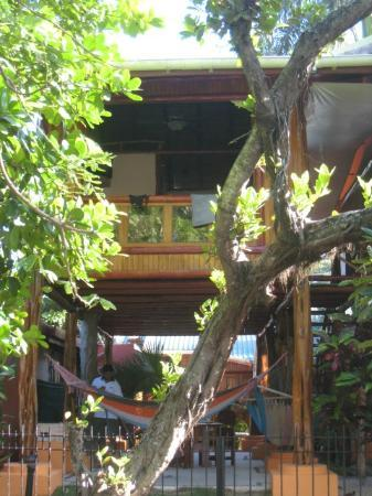 Samara Tree House Inn照片