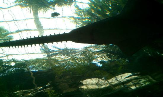 Dallas World Aquarium Reviews