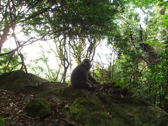 Seibu Trail : 林道