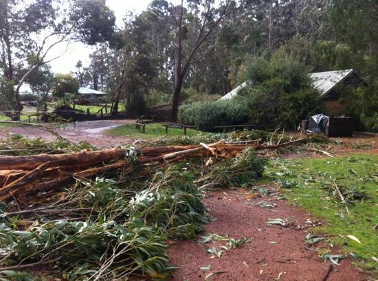 Pump Hill Farm Cottages: collapse tree outside my cottage