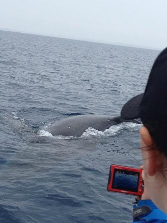 That's Awesome Dusk Patrol Whale Watching: Curious whales coming right up to the boat
