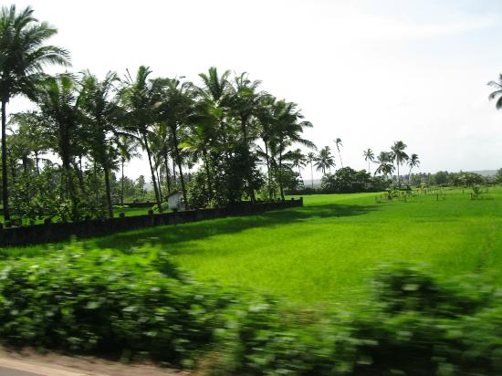Raman Cottages: Goa roadside